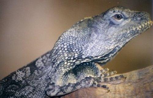 Lizard by n.groves