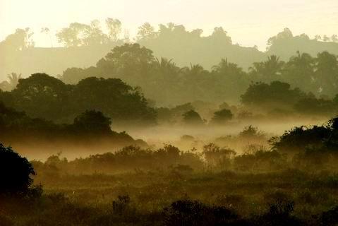 Morning Mist by sasam