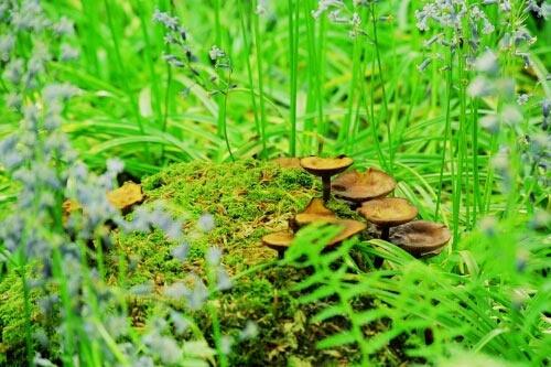 Fungi by ganstey