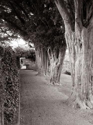 Garden Walk by alansnap
