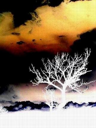 Tree by dani2