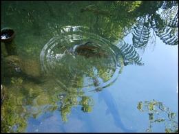Fishy Reflection