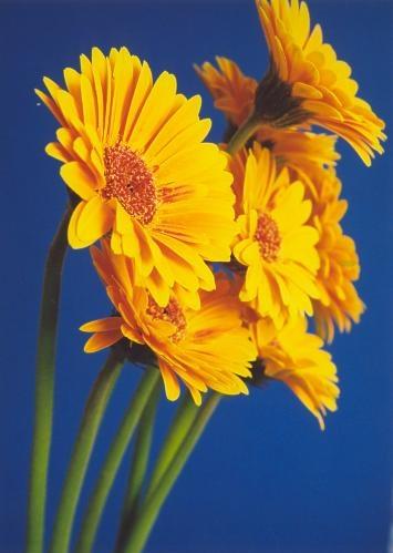 Hello Sunshine... by ariane