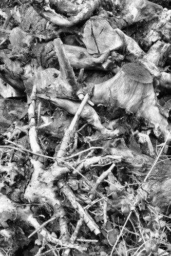 Dead Stumps by yidthekid