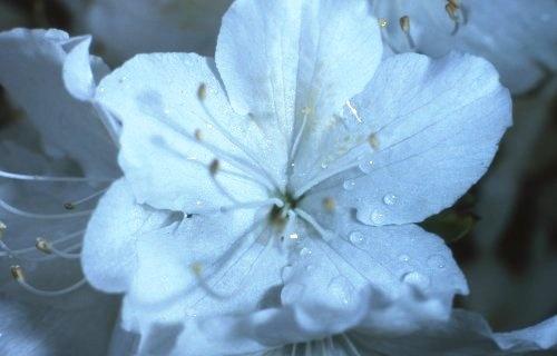 flower by n.groves