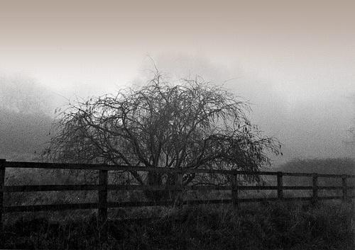 Misty by panokes