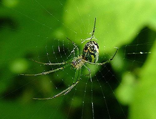 spider by jeffandrebecca