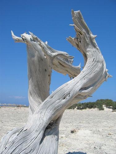 Tree by jonjeds