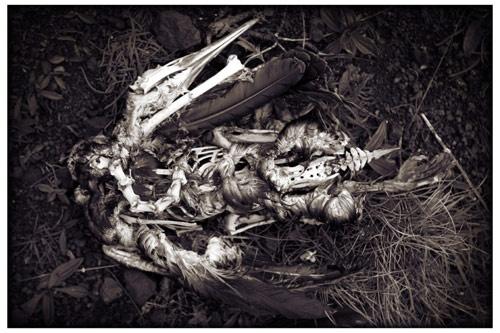 DEAD BIRD by mcnair