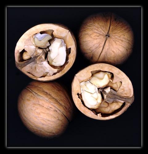 NUTS by mcnair