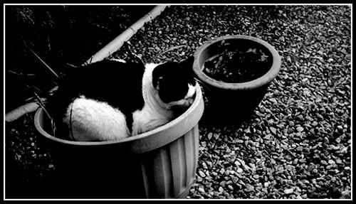 No Wonder My Plants Dont Grow 2 by eskimo