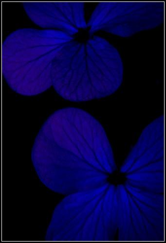 Blue by eskimo