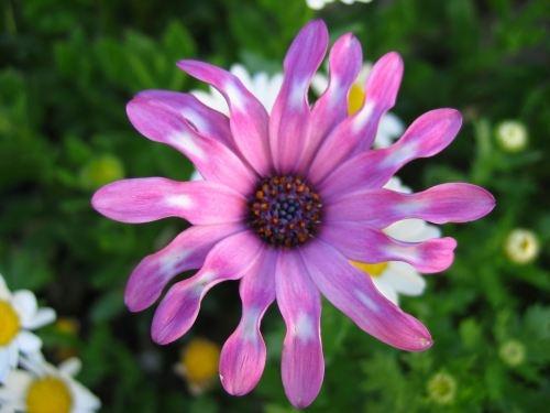 flor de espania by mctaylorspain