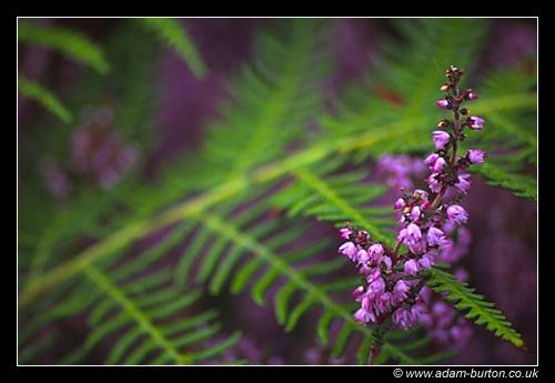 Delicate Nature by adamburton