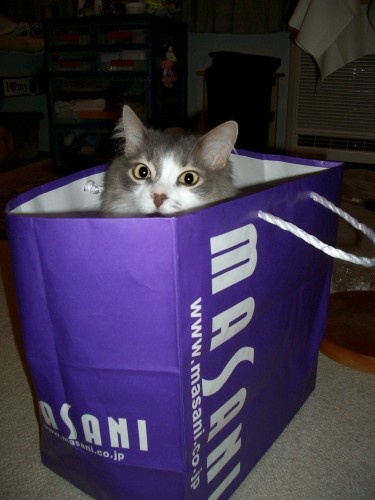 cat\'s in the bag by laura1