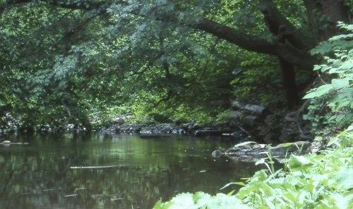 stream by n.groves