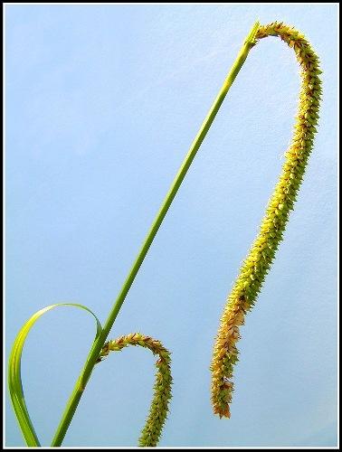Grass Head (2) by jon1169
