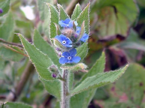 wild flower by Garrity