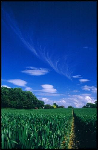 Happy Trail\'s by eos3