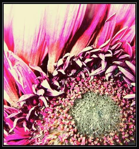 Pretty In Pink by eskimo