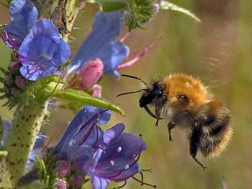 Bee-ing by AdrianTurner