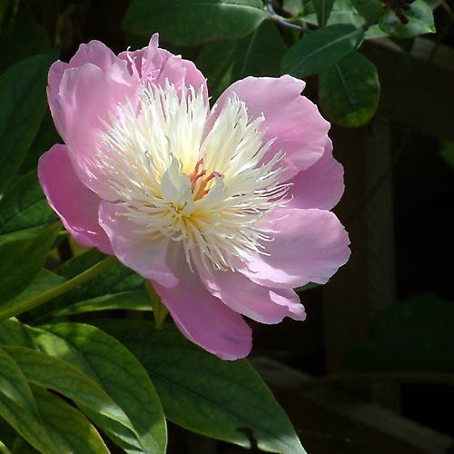 In Dad\'s garden by abel