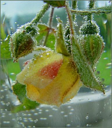 Rose` Spritzer by Mavis