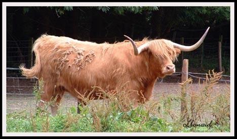 This ain\'t no \'Bull\' by llonaid