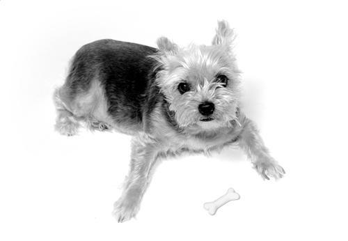 Lou Lou The Doglet by tezza