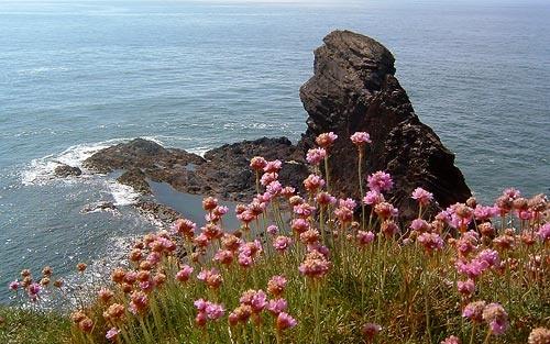 Pembroke Wild Flowers by fieldperson