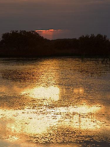 On Golden Ponds by AdrianTurner