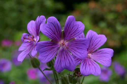 Flower by jonkennard