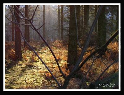 Sunlight by janehewitt