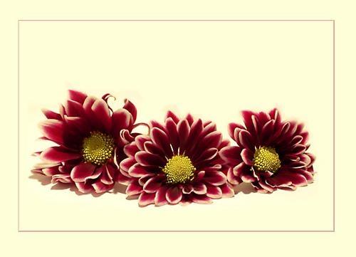Aun mas flores by niamh
