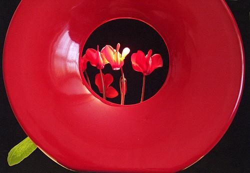 Red Vase by magda_indigo