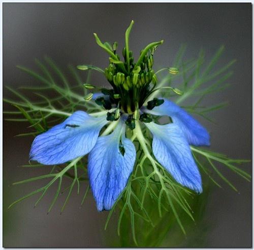 Wild Blue by celestun