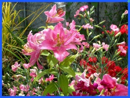 Flowers by daringdaphne