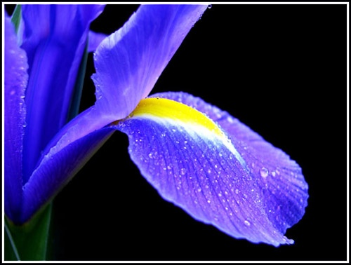 Iris Drops by vivo