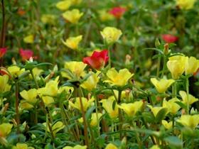 Wild Flowers by ahitsjustme