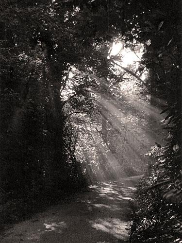 Sunbeams by hattrick