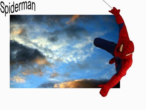 Spider by sun yin