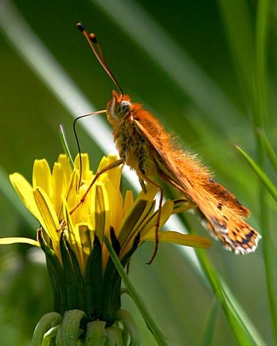 Butterfly by billma