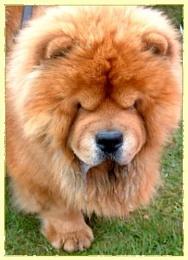 teddy Bear?