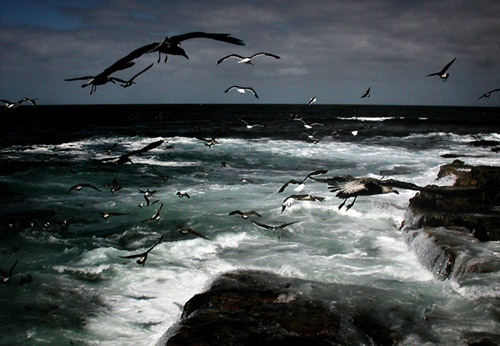 Seagull Blizzard by david deveson