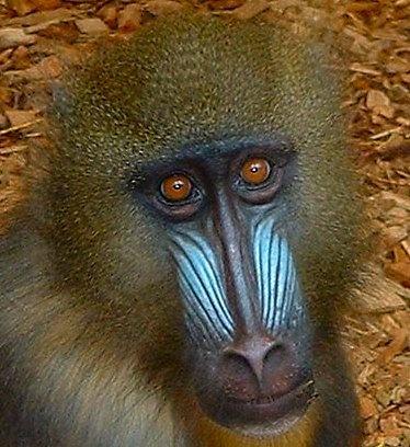 Monkey by melliemel