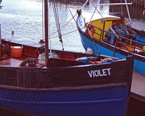 Violet by 007bones