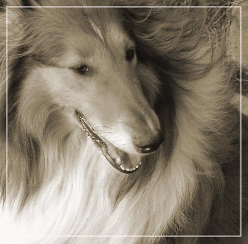 Lassie Come Home by ga1963