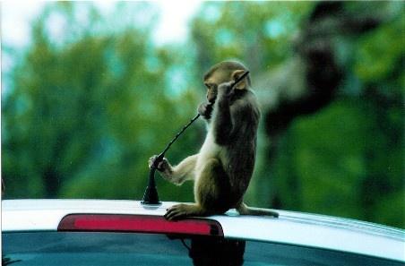 Cheeky monkey! by Baz Hilder
