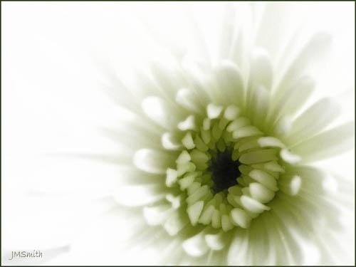 White by janehewitt