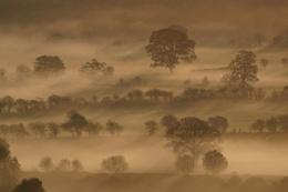 Dawn Light On Rising Mist